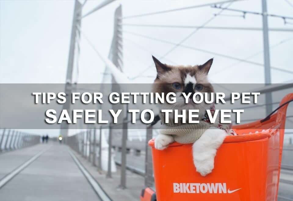 Tips for Getting Your Pet Safely to the Vet