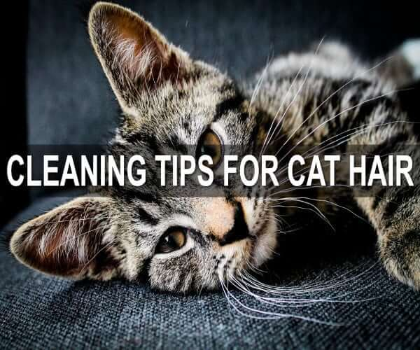 cleaning tips for cat hair