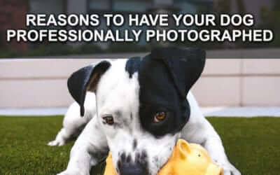 Reasons to Have Your Dog Professionally Photographed
