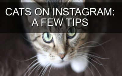 Cats on Instagram: A Few Tips