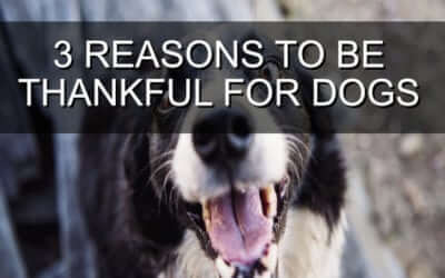 3 Reasons to be Thankful For Dogs