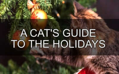 A Cat's Guide to The Holidays