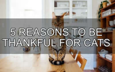 5 Reasons to be Thankful for Cats