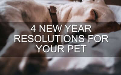 4 New Year Resolutions for Your Pet