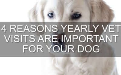 4 Reasons Yearly Vet Visits Are Important For Your Dog