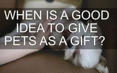 When is it a Good Idea to Give Pets as a Gift?