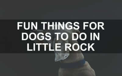 Fun Things For Dogs To Do In Little Rock