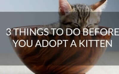 3 Things To Do Before You Adopt a Kitten