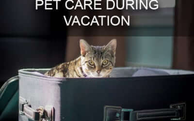 Advice From Your West Little Rock Vet: Pet Care During Vacation