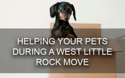 Helping Your Pets During a West Little Rock Home Move