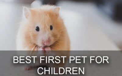 Advice From a Little Rock Vet: Best First Pet For Children