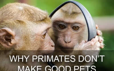 Vet Clinic Real Talk: Why Primates Don't Make Good Pets