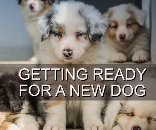 Getting Ready for a New Dog