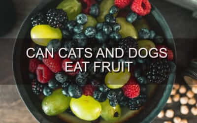 Can Dogs and Cats Eat Fruit?