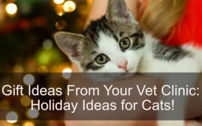 Gift Ideas From Your Vet Clinic: Holiday Ideas for Cats!