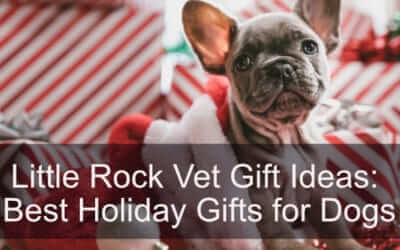 Little Rock Vet Gift Ideas: Best Holiday Gifts for Dogs