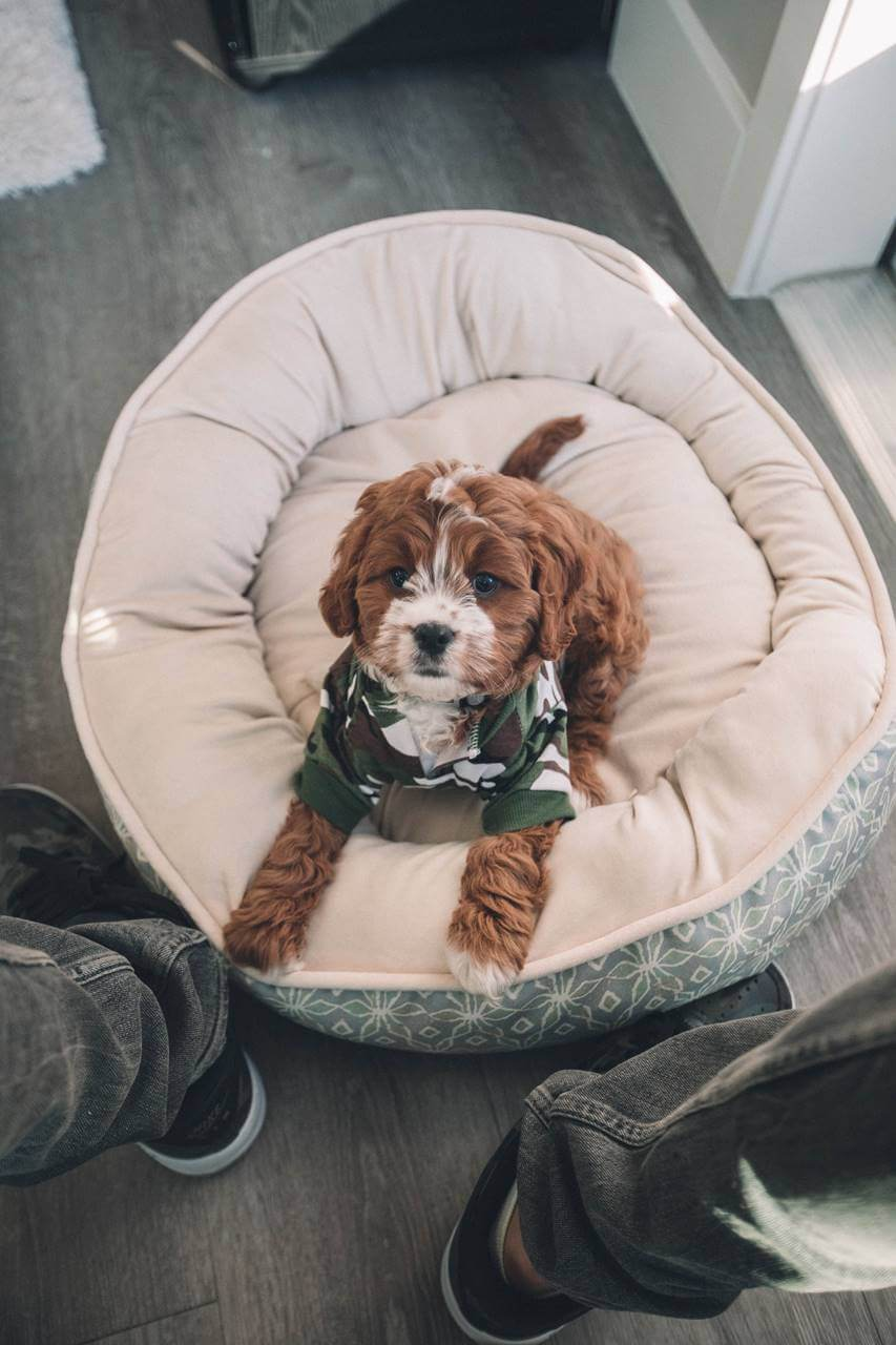 Puppy in waiting room for pet exam