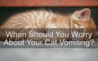 When Should You Worry About Your Cat Vomiting?