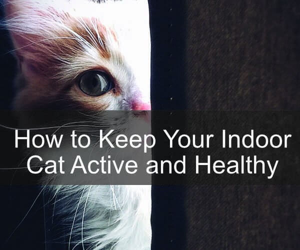 How to Keep Your Indoor Cat Active and Healthy