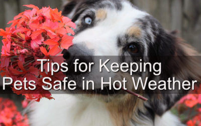 Tips for Keeping Pets Safe in Hot Weather