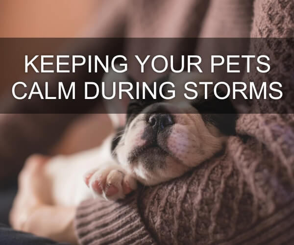 Keeping Your Pets Calm During Storms