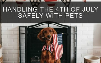 Handling the 4th of July Safely With Pets