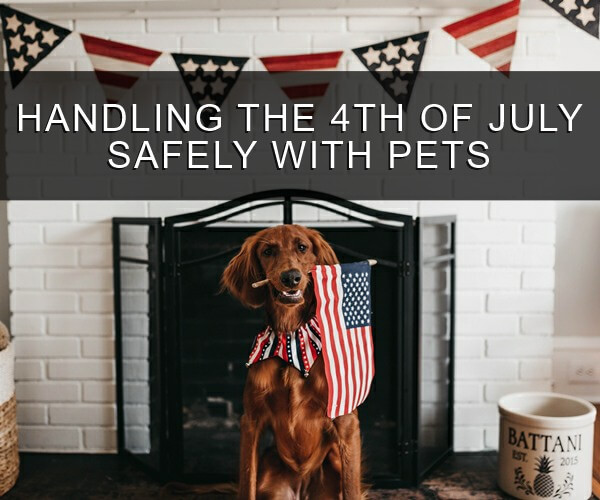 Happy Pet is Ready for Fourth of July