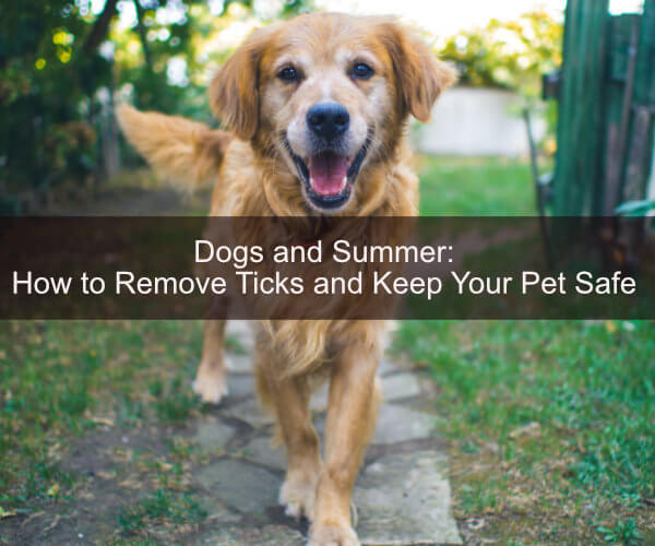 Dogs and Summer: How to Remove Ticks and Keep Your Pet Safe