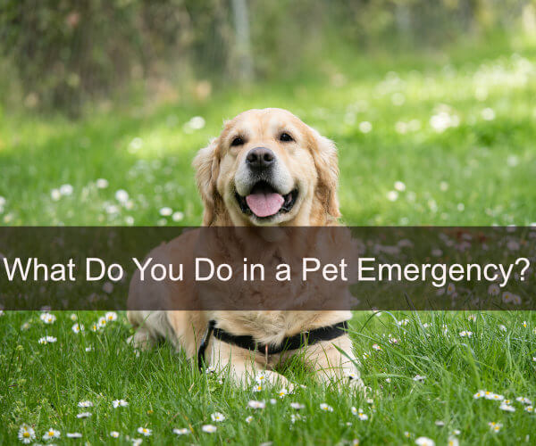 What Do You Do in a Pet Emergency?