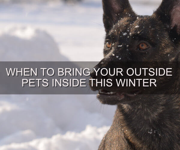 When to Bring Your Outside Pets Inside