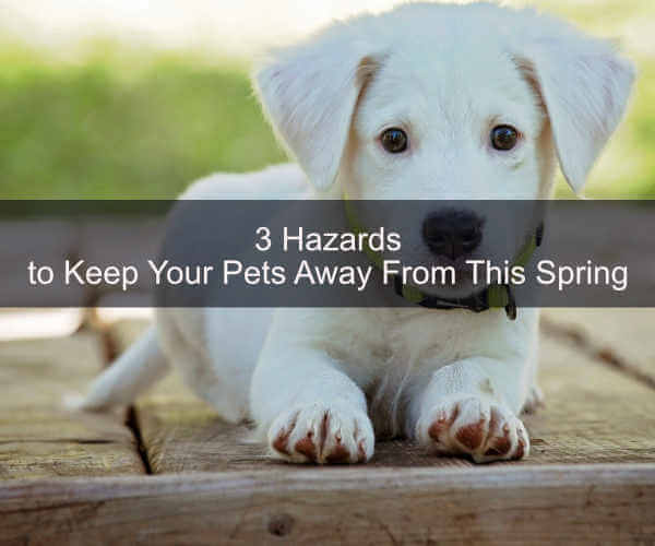 3 Pet Hazards to Keep Your Pets Away From This Spring